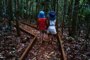 Forêt, Nouvelle-Calédonie